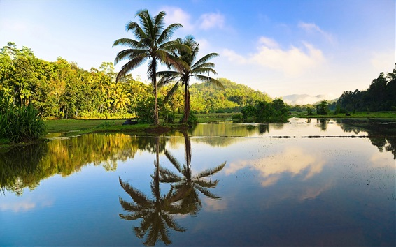 Wallpaper Sri Lanka beautiful nature, trees, palms, water reflection