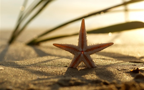Обои Морская звезда, трава, пляж, песок, боке