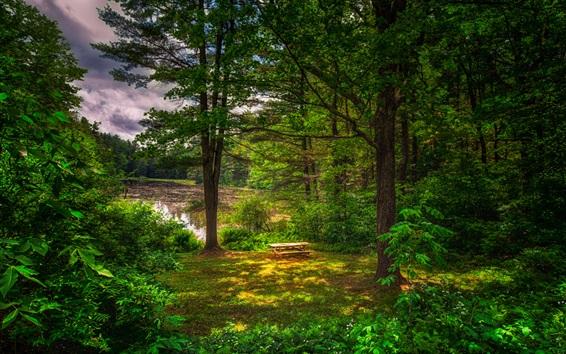 Fond d'écran Été, forêt, arbres, herbe, étang