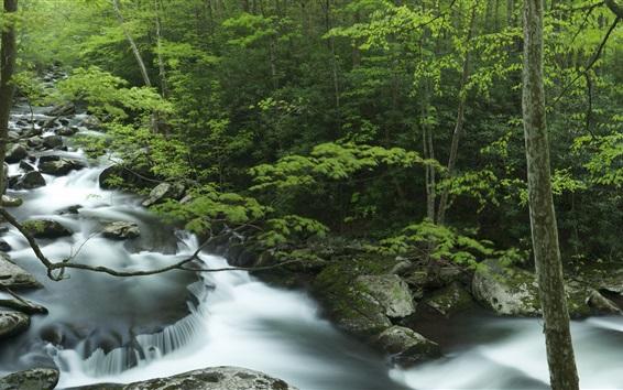Обои Тремон, Грейт-Смоки, ручей, камни, деревья, штат Теннесси, США