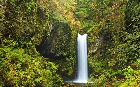 Wallpaper USA, Oregon, Multnomah falls, moss, shrubs, waterfall