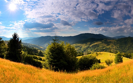 Wallpaper Ukraine, Carpathians, grass, trees, mountains, clouds, sun