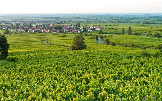 Papéis de Parede Vila, cidade, campos, casas, verde, Edenkoben, Alemanha