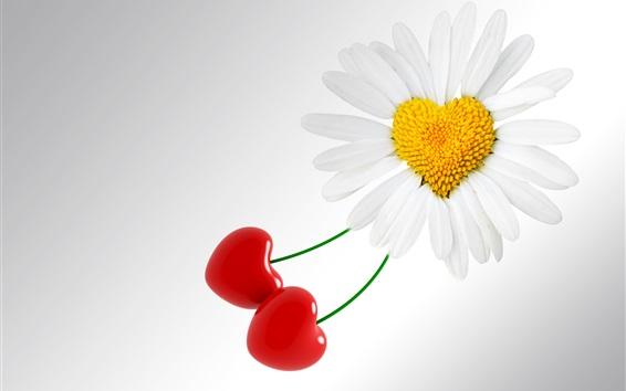 Wallpaper White daisy flower and cherries, love hearts