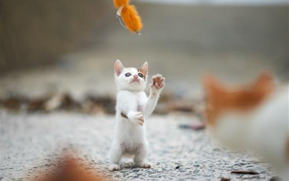 壁紙 ホワイト子猫は、ゲームをプレイするために立ちます