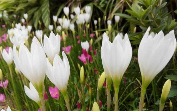 Papéis de Parede orquídeas brancas no verão