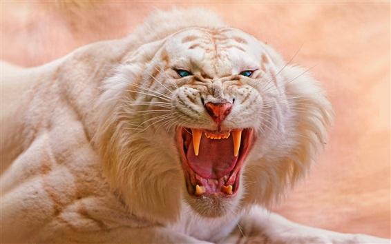 壁紙 ホワイトタイガーの轟音、大きな猫クローズアップ