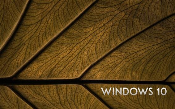 Wallpaper Windows 10 system, leaf background