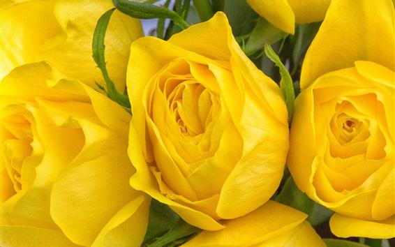 壁紙 黄色の花のマクロ撮影をバラ