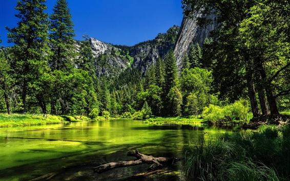 壁紙 ヨセミテ国立公園、カリフォルニア州、アメリカ、湖、緑の木々、山