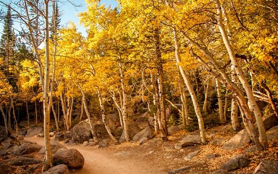 Обои Осенью березовый лес, тропинка, камни