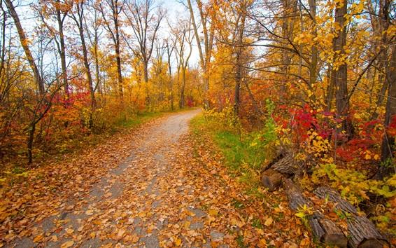tree path track leaves - photo #19