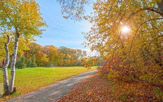 Fond d'écran Automne parc, chemin, arbres, rayons du soleil