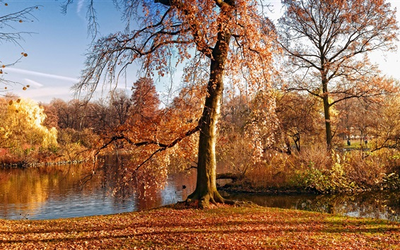 Wallpaper Autumn, trees, yellow leaves, river