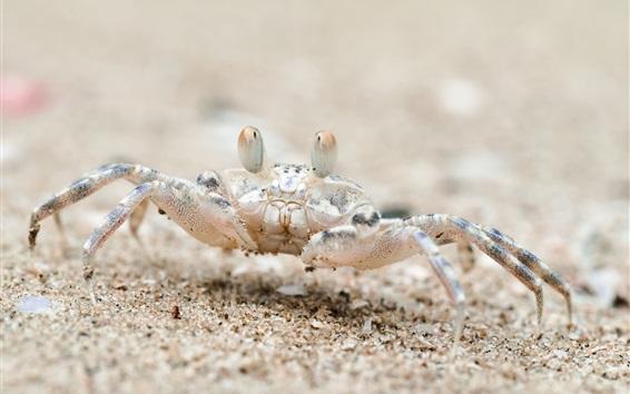 Обои Пляж, песок, краб, Таиланд