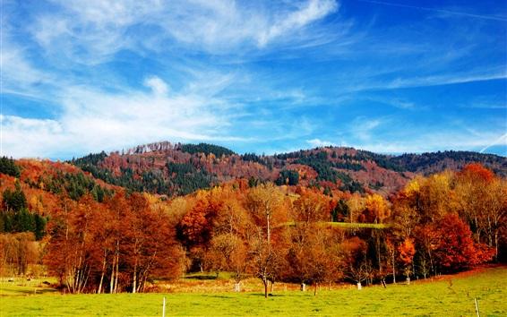 Обои Красивый осенний сезон, деревья, трава, голубое небо