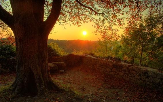 Обои Красивые утро восход солнца, дерево, дерево, ветки, листья