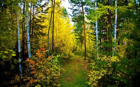 Fond d'écran Belle forêt de la nature, les arbres