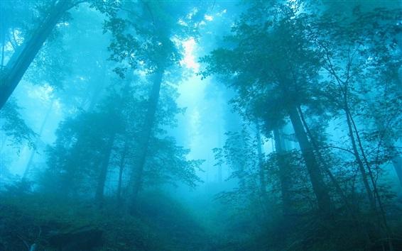 Wallpaper Blue forest, fog, trees, dawn