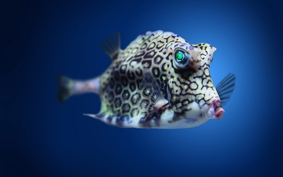 Wallpaper Boxfish cowfish in Atlantic underwater