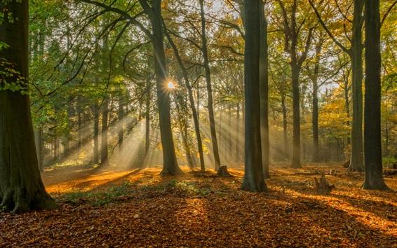 Fondos de pantalla Brujas, Bélgica, bosque en otoño, los rayos del sol