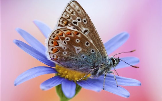 Wallpaper Butterfly and blue flower