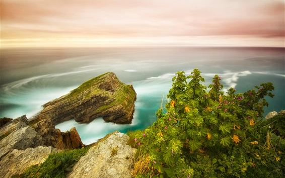 Fond d'écran Coast, plantes, fleurs, rochers, mer