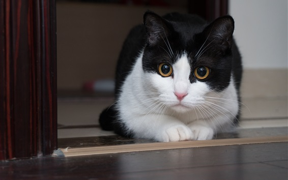 Wallpaper Cute cat, white black