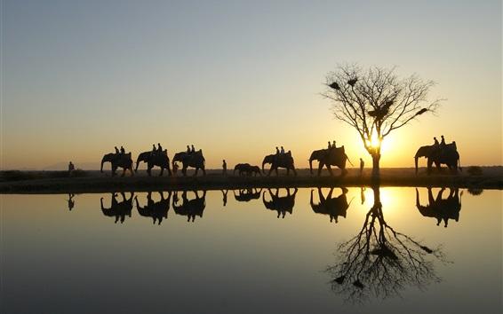 배경 화면 일몰 사파리 공원에서 코끼리