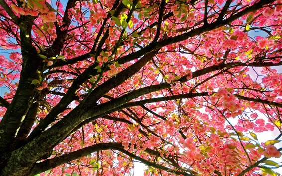 Wallpaper Flowers tree, pink style, twigs, spring