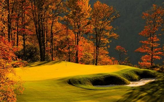 Wallpaper Forest, trees, grass, lawn, golf, autumn