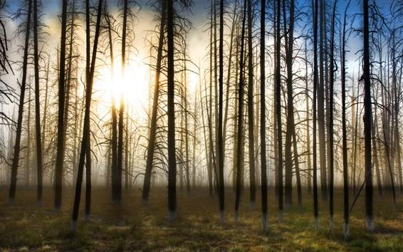 Fond d'écran Les arbres forestiers dans le soleil, l'herbe, le brouillard