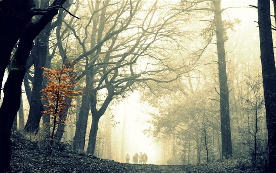 Обои Лес, деревья, туман, прогулка дорога, люди