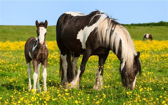 Wallpaper Horses, summer, wildflowers, grass