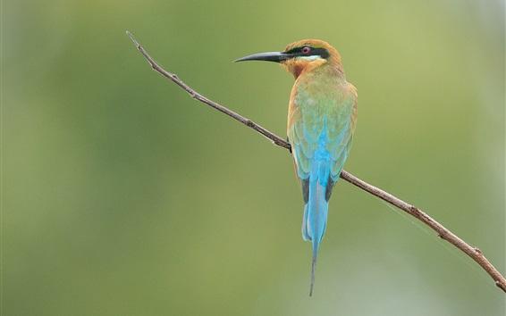 Обои Kingfisher, веточка