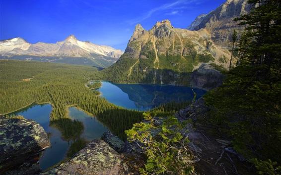 Fond d'écran Lac, montagnes, arbres, forêt, ciel bleu