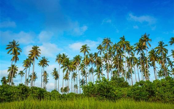 Обои Малайзия, Bohey Dulang остров, пальмы, трава, голубое небо