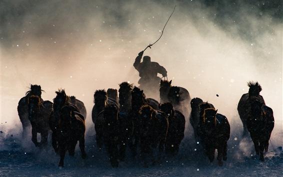 Papéis de Parede Mongólia, cavalos correndo no inverno, neve