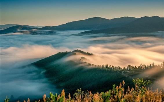Fond d'écran Matin nature paysage, montagnes, arbres, brouillard