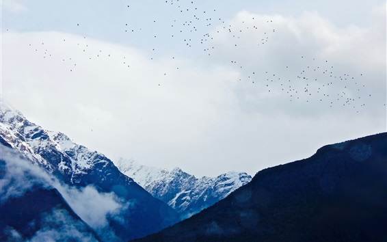 Wallpaper Mountains, snow, clouds, birds flying