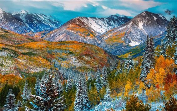 Wallpaper Mountains, trees, snow, winter