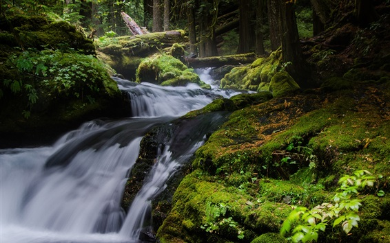 Wallpaper Nature landscape, waterfall, trees, moss