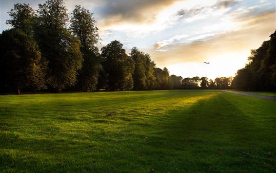 Wallpaper Nature sunset, lawn, grass, trees, clouds, bird