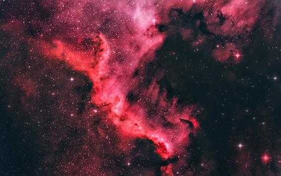 Wallpaper North America nebula, beautiful space, star, purple style, universe