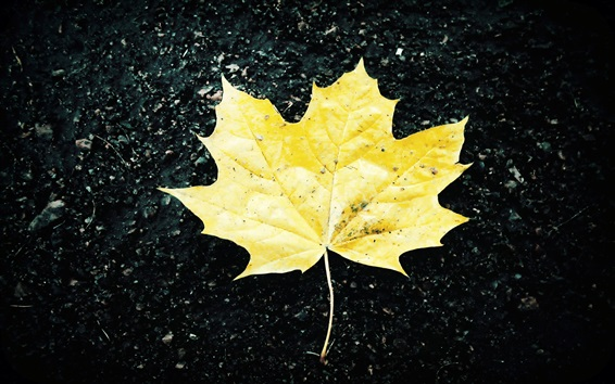 Wallpaper One yellow maple leaf, ground, autumn