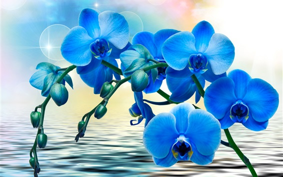 Wallpaper Orchids, blue flowers, phalaenopsis, water