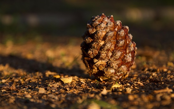 Wallpaper Pine cones on the ground