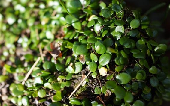 Обои Растения зеленые листья на земле