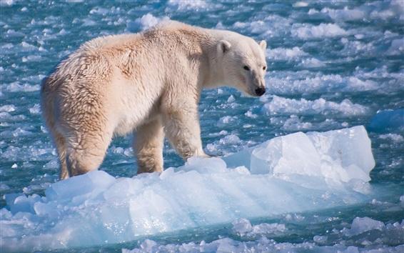 배경 화면 플로트 얼음 세계에서 북극곰