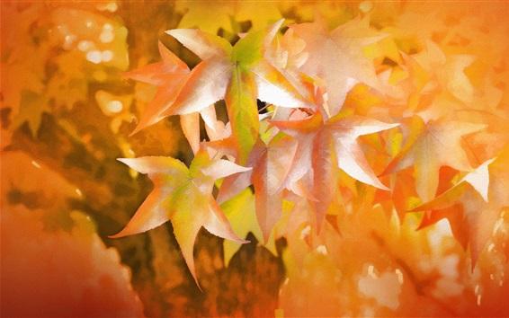 Обои Красные листья клена, текстуры, осень